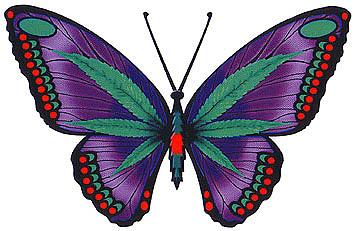 Цветы Бабочки Уход